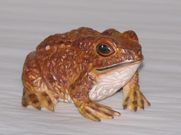 壁纸 动物 两栖 蛙 600_450