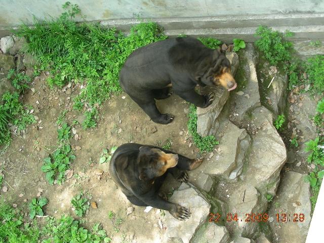 红山森林动物园之乐&儿子喜欢上了小猴子和长颈鹿
