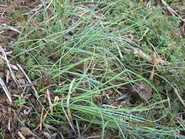 杂草和野菜在刚露出嫩芽的时候就被连根铲除了