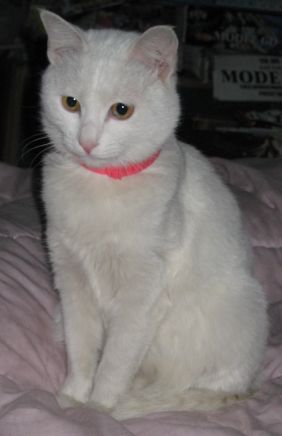 壁纸 动物 猫 猫咪 小猫 桌面 282_436 竖版 竖屏 手机