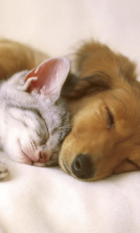 热爱橹之人与动物最新版_壁纸 动物 狗 狗狗 480_800 竖版 竖屏 手机