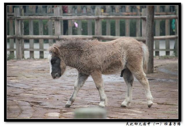 小动物——杭州野生动物世界亲子游系列图片之一