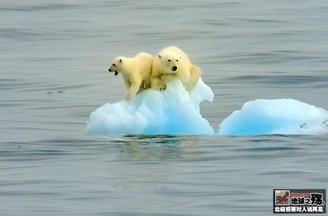 地球之殇:北极熊要对人类说再见